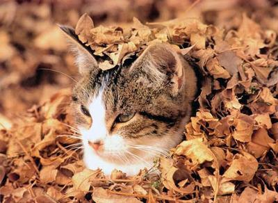潜む猫10