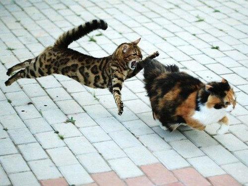 07不意打ちする猫たち
