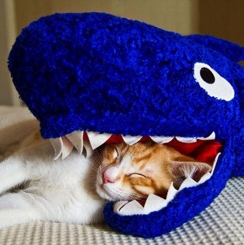 サメ猫08
