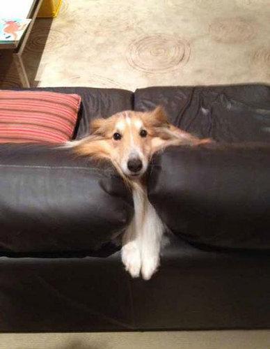 犬や猫の家具の使い方05