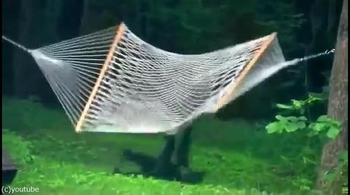 子グマがハンモックで遊ぶ06