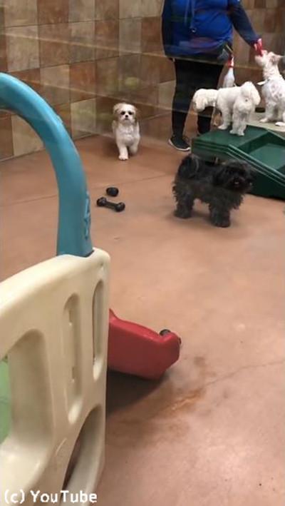 ペットホテルに預けられていた犬、飼い主を見つけた瞬間…02
