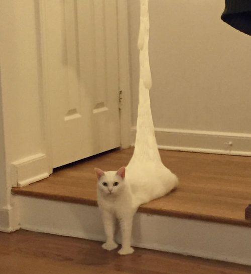 溶けてる猫02