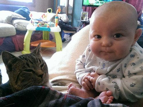 妊娠中に拾った猫が、今は赤ちゃんと親友に11