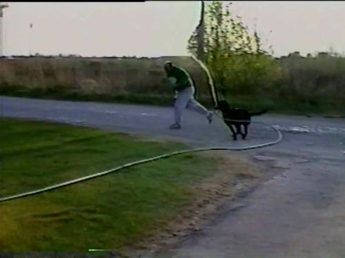 ホースと犬04