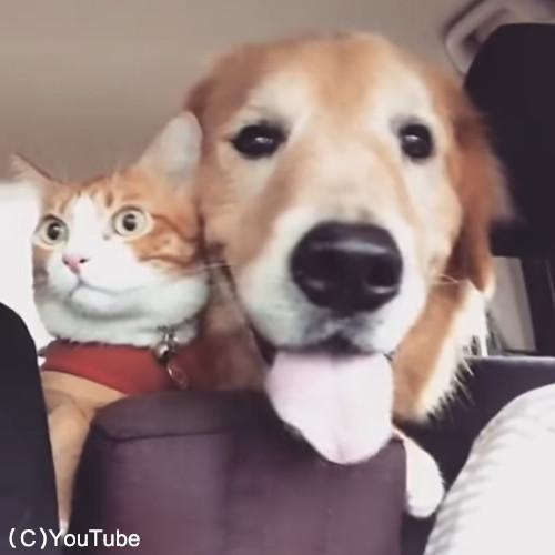 犬と猫のお出かけ04
