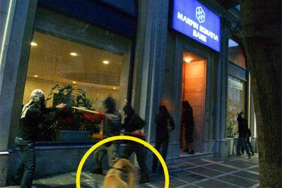 ギリシャの暴動犬15