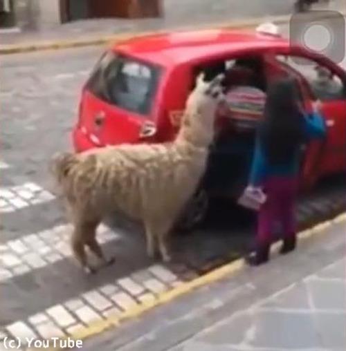 ペルーの日常風景01