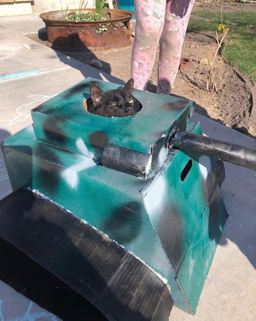 ダンボール猫戦車08