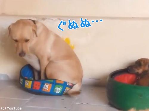 1214犬がベッドを交換したら00