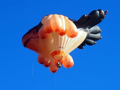 空飛ぶクジラ08