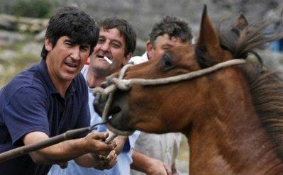 スペインの馬祭り14