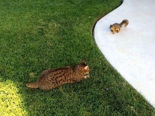 猫とリスのにらみあい01