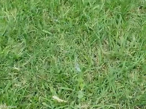 光速でボールをキャッチする犬03
