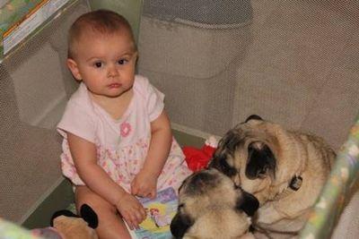パグと赤ちゃん03