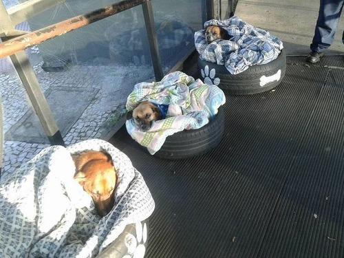 ブラジルのバス停で犬に布団01