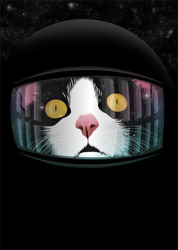 猫が狙っているもの07