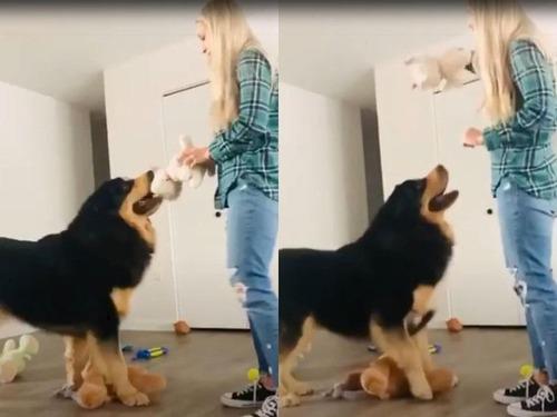 大型犬を飼うときに気を付けること00