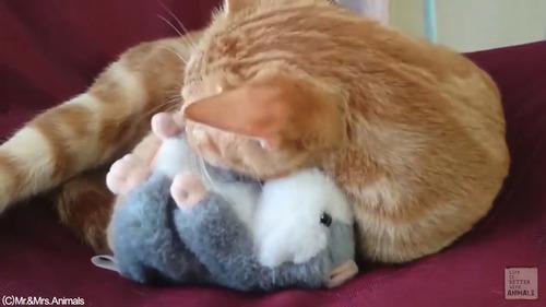 声真似おもちゃを猫に与えた結果03