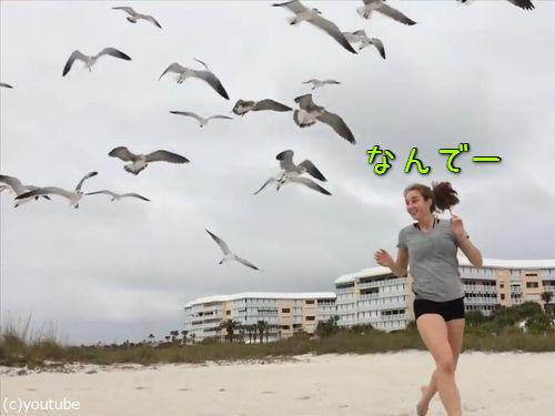 カモメの群れに追いかけられる女の子00
