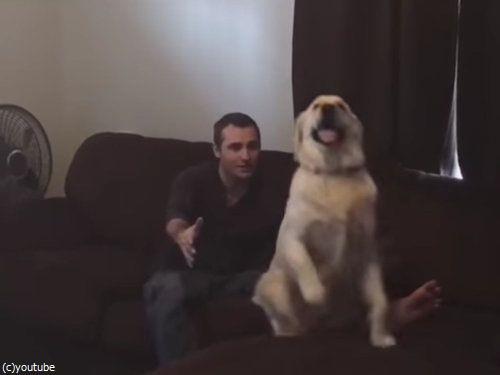 背中からダイブする犬04