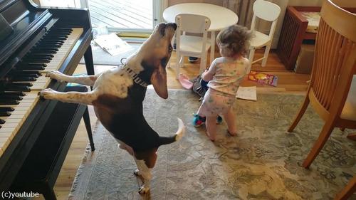ピアノ弾き語りをする犬と踊る女児02