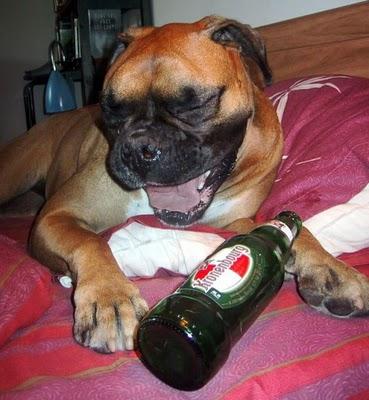 ビール大好き犬05