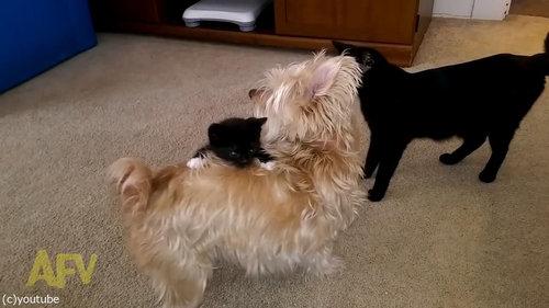 犬の体に子猫がしがみつく01