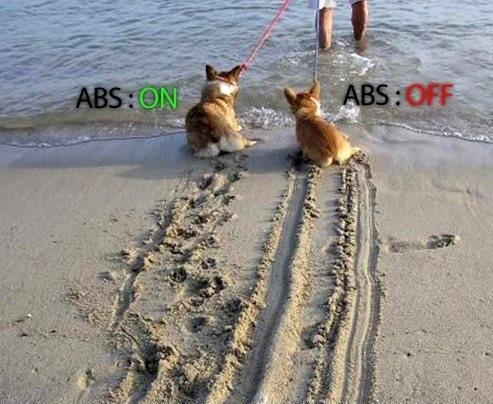 ABS犬01