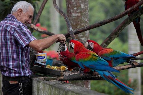 ベネズエラのインコ07