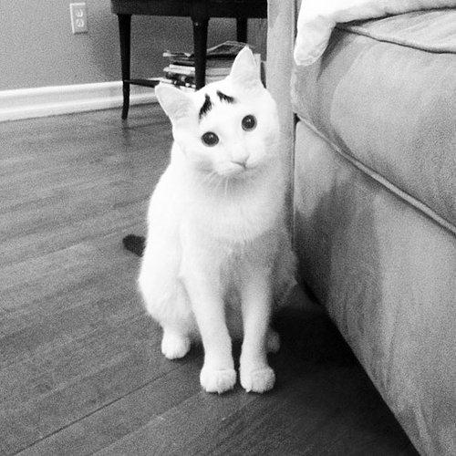 変わった毛並みの猫02