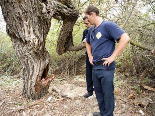 木に飲み込まれた男性03
