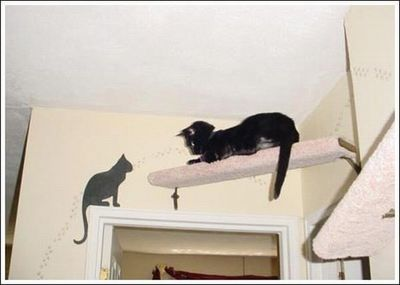 猫用の足場12