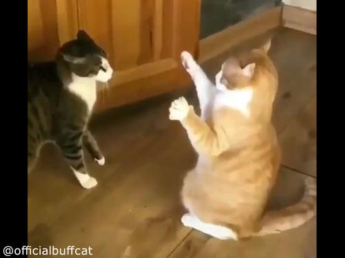 にらみあう猫…まさかのオチに笑う00