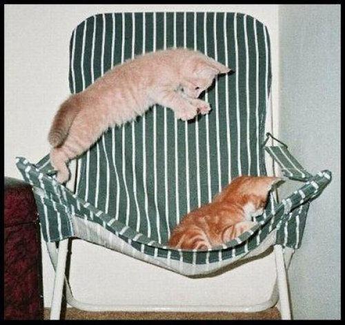08不意打ちする猫たち