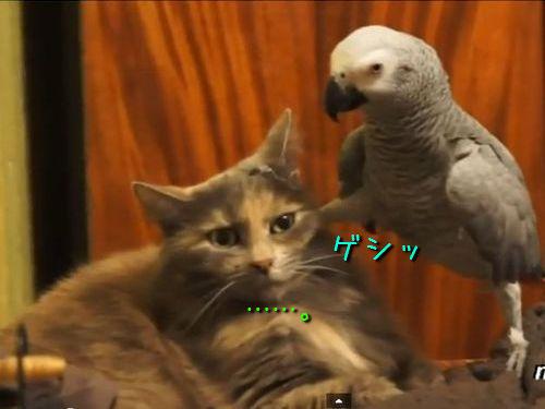 小鳥に翻弄される猫たち00