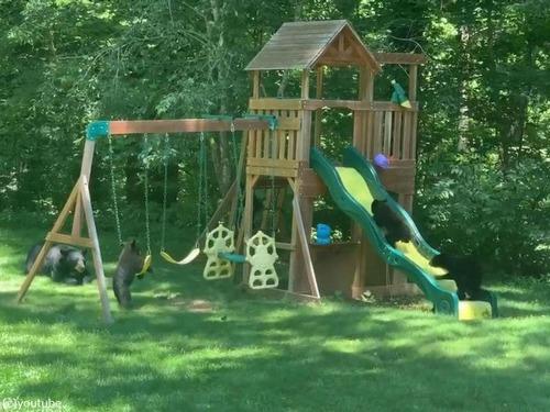 庭の遊具でクマの親子たちが楽しそうに遊んでた00