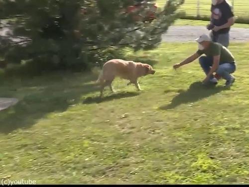 行方不明の犬、100km離れた前の家にいた03