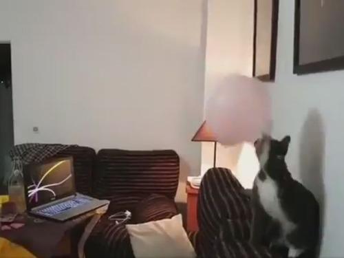 バレーボール猫01