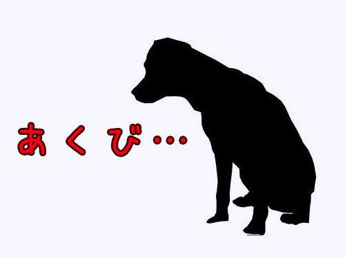 犬のあくびが中断されたときの表情00