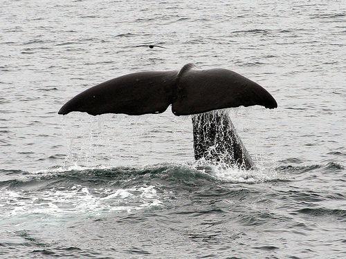 クジラの寝方00