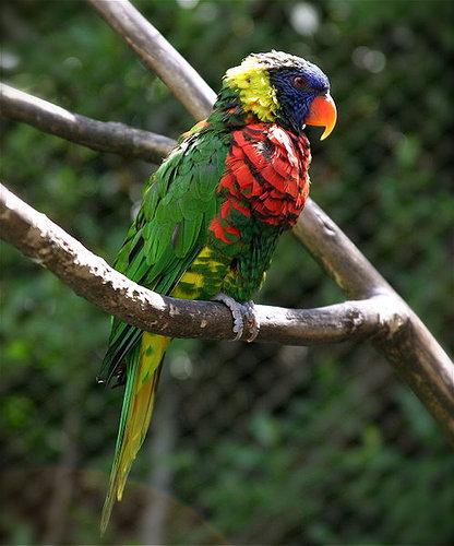 オーストラリアの鳥害02