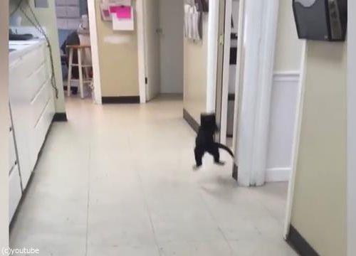 ピンポン猫07