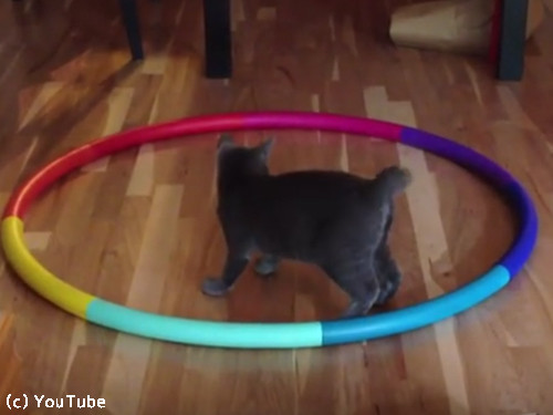 猫フラフープ01