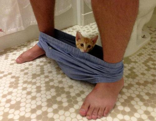 猫に生活を脅かされる27