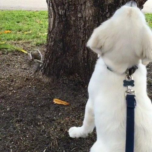 木を見上げる犬「リス、どこ行ったのかなぁ」04