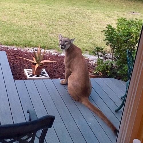 隣人の猫01