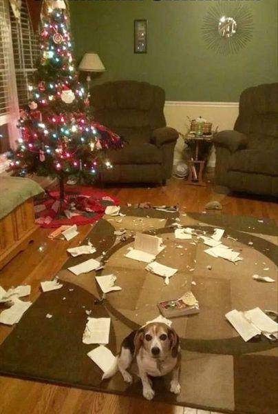 クリスマスとペット22