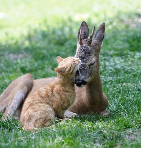 鹿と猫14