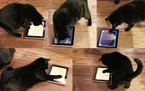 iPadに写っていたもの03